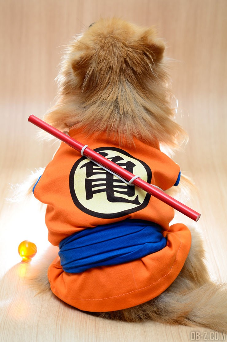 Cosplay Dragon Ball Chien (Goku)