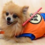 Cosplay Dragon Ball (Chien)