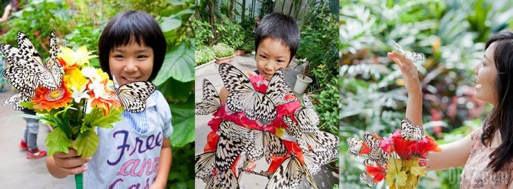Papillons du Jardin Ryugujo à Okinawa
